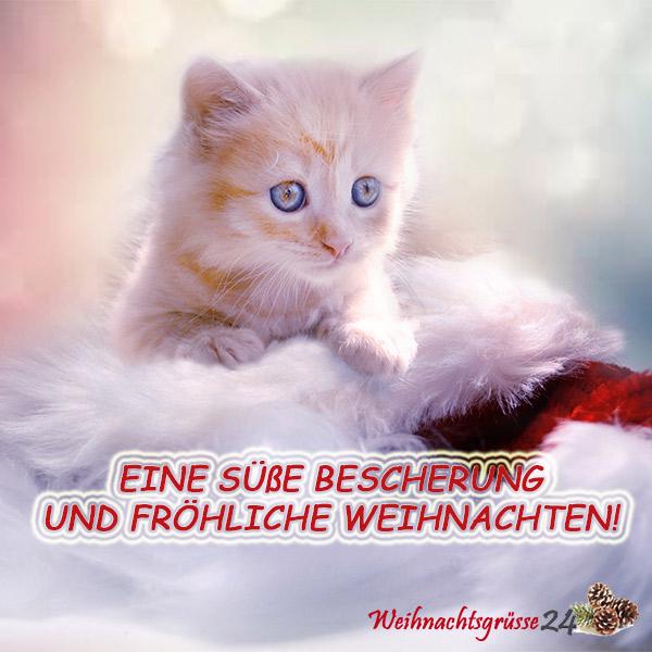 Weihnachtsgrüße Whatsapp » lustige & originelle Bilder